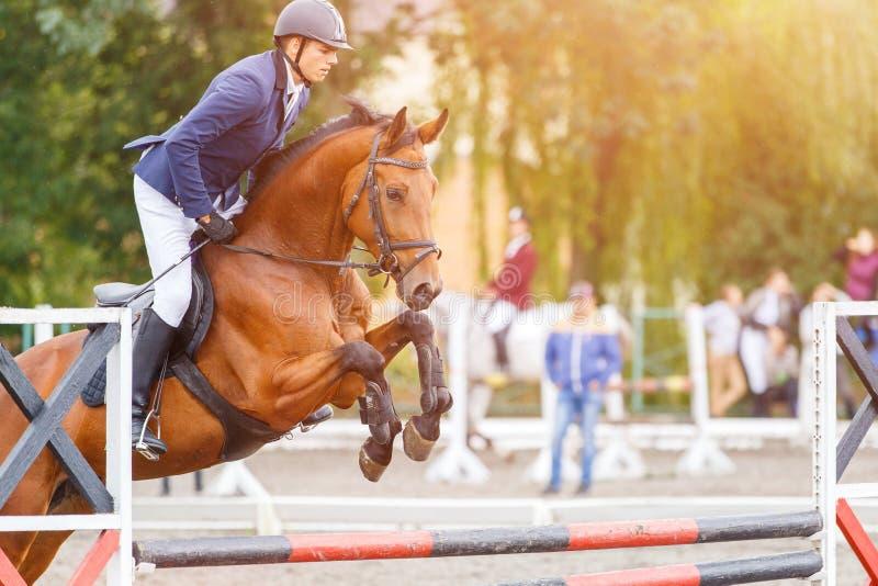 Молодой человек всадника скача на лошадь над препятствием стоковые изображения rf
