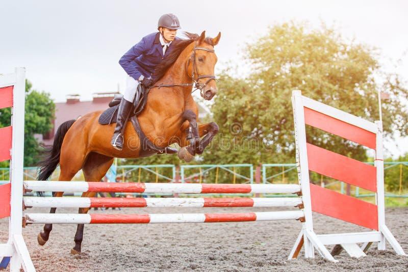 Молодой человек всадника скача на лошадь над препятствием стоковые изображения