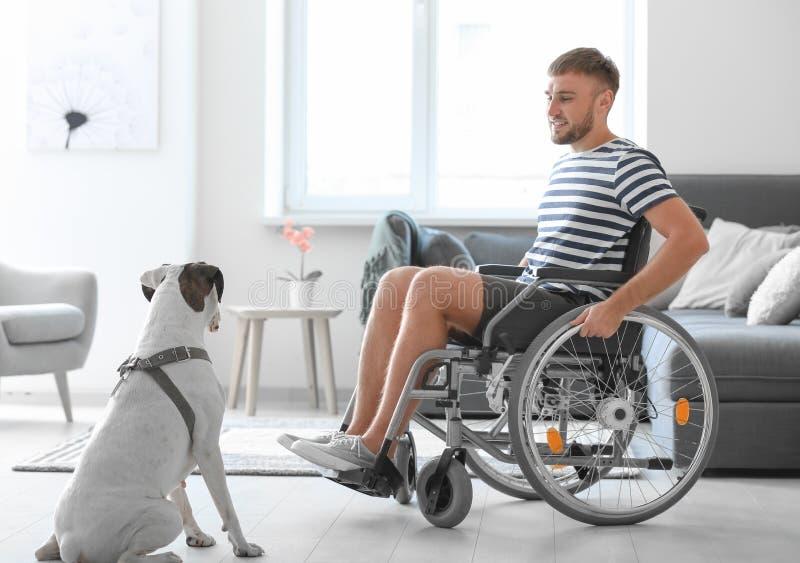 Молодой человек в кресло-коляске с собакой обслуживания дома стоковые фото