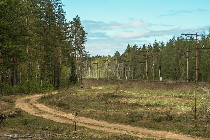 Молодой человек идет вниз с проселочной дороги родины через зеленый сосновый лес стоковое фото