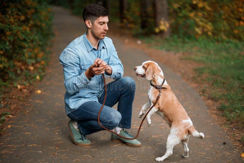 Молодой человек, наслаждающийся временем с животным, тренировочной собакой стоковые изображения rf