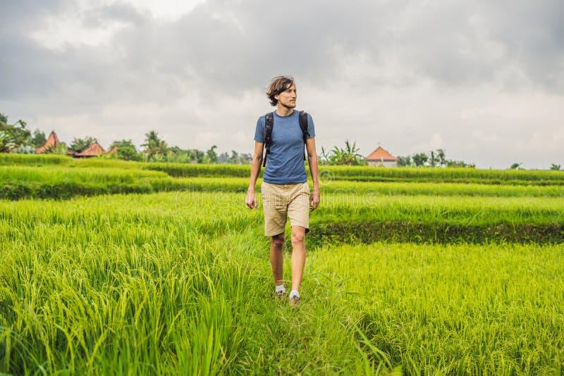 Молодой человек на зеленой плантации поля риса каскада Бали, Indonesi стоковое фото rf