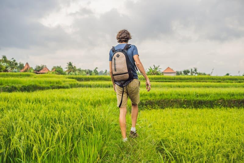 Молодой человек на зеленой плантации поля риса каскада Бали, Indonesi стоковые изображения rf