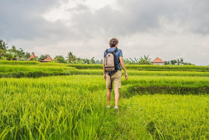 Молодой человек на зеленой плантации поля риса каскада Бали, Indonesi стоковое фото