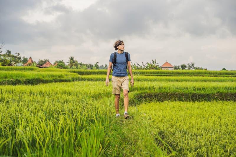 Молодой человек на зеленой плантации поля риса каскада Бали, Indonesi стоковые фотографии rf