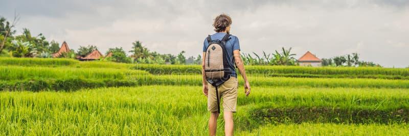 Молодой человек на зеленой плантации поля риса каскада ЗНАМЯ Бали, Индонезии, длинный формат стоковые изображения