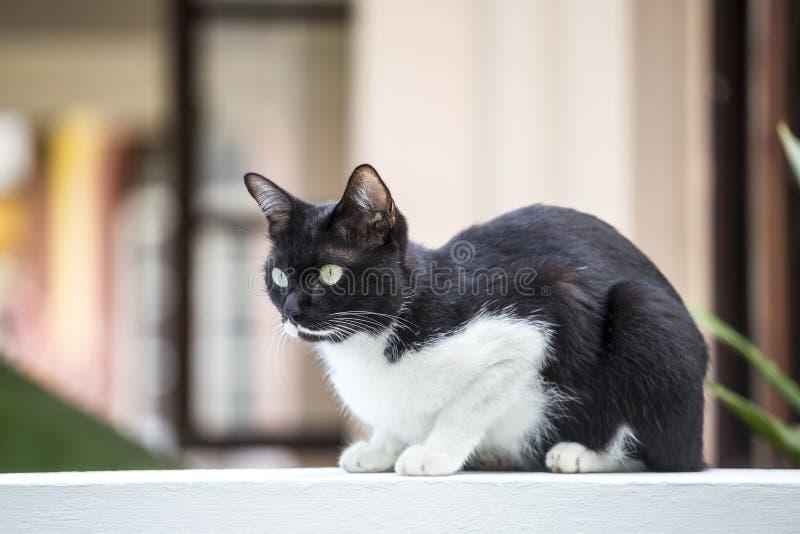 Молодой черно-белый кот сидя на белой бетонной стене над запачканной предпосылкой дома стоковые фото