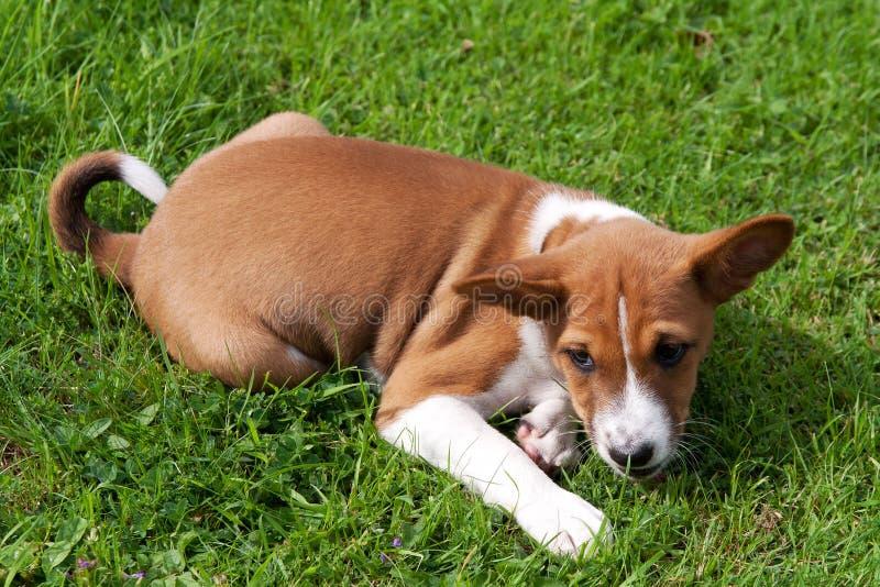 Молодой щенок для того чтобы pounce стоковые изображения