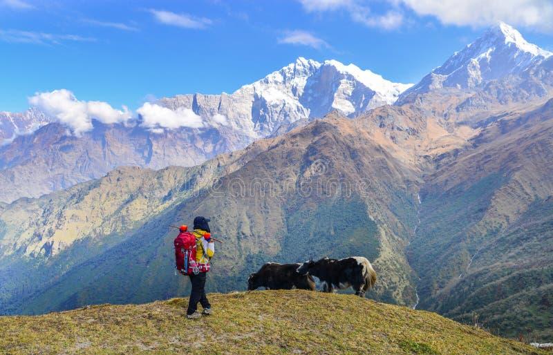 Молодой trekker смотря гору снега стоковое изображение rf