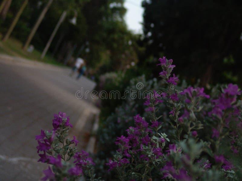 Молодые взрослые предназначенные для подростков пары идя далеко от камеры на зеленом парке вымостили переулок на заходе солнца с  стоковая фотография