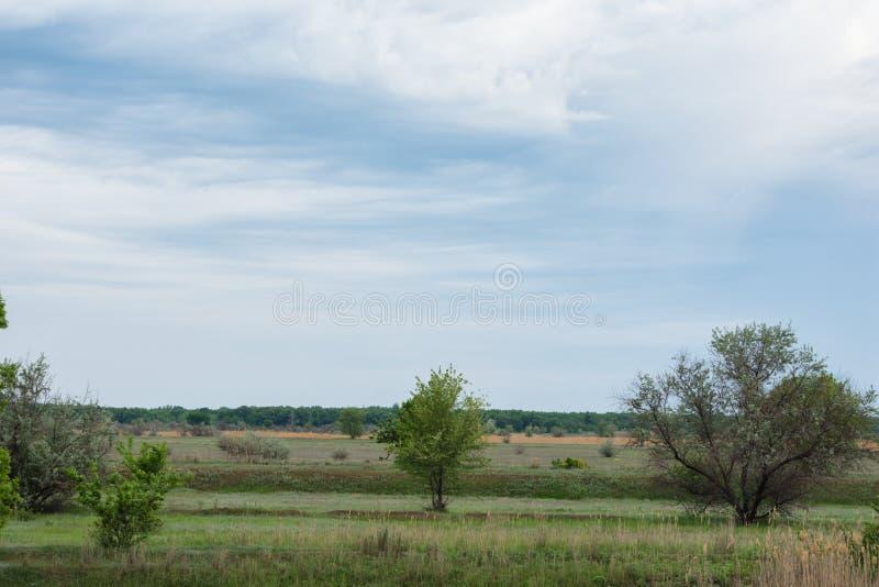 Молодые деревья против облачного неба и большого старого леса на горизонте стоковая фотография