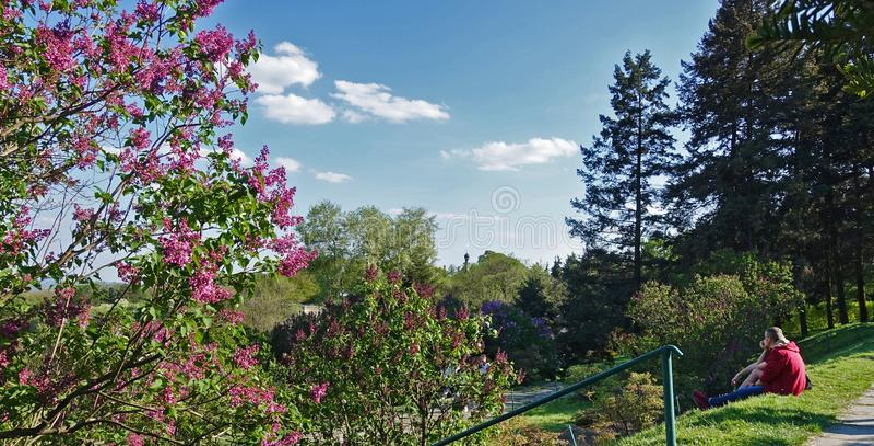 Молодые люди восхищают цветя деревья в ботаническом саде стоковая фотография