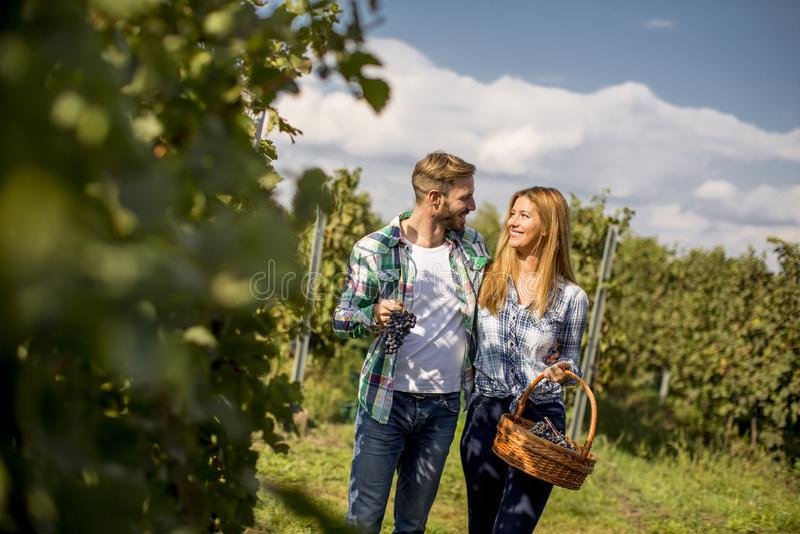 Молодые пары в винограднике стоковые изображения