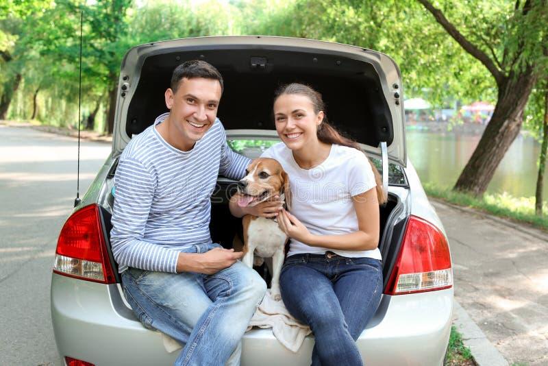 Молодые пары с милой собакой сидя в багажнике автомобиля стоковые фотографии rf