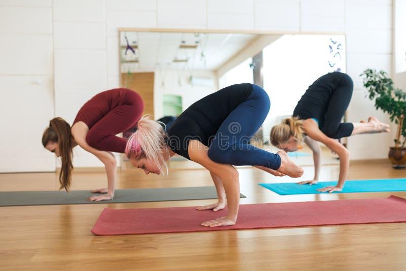 Молодые привлекательные девушки практикуя йогу, стоя в тренировке крана, представление Bakasana, разрабатывающ, нося sportswear,  стоковое изображение