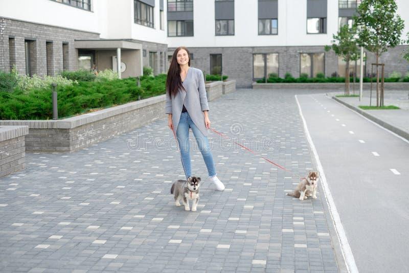 Молодые привлекательные женщины идя с щенком 2 лайок на улице стоковые изображения rf