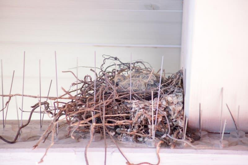 Молодые птицы сидя в гнезде птицы стоковое изображение rf