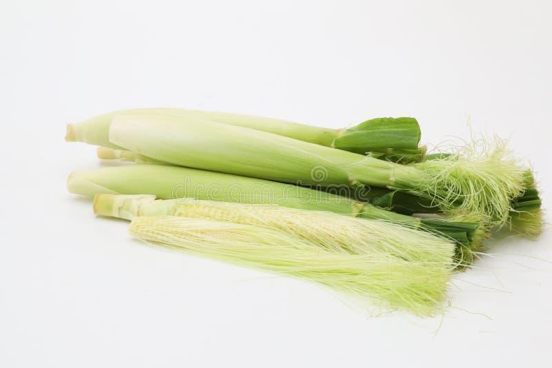 Молодые corns в белой предпосылке стоковая фотография