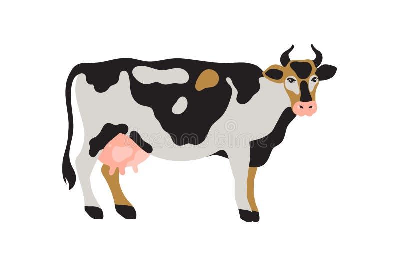 Молоко запятнало корову в черной, белом, сером, золоте и пинке Земледелие, сельское хозяйство, жизнь деревни любимчик иллюстрация штока