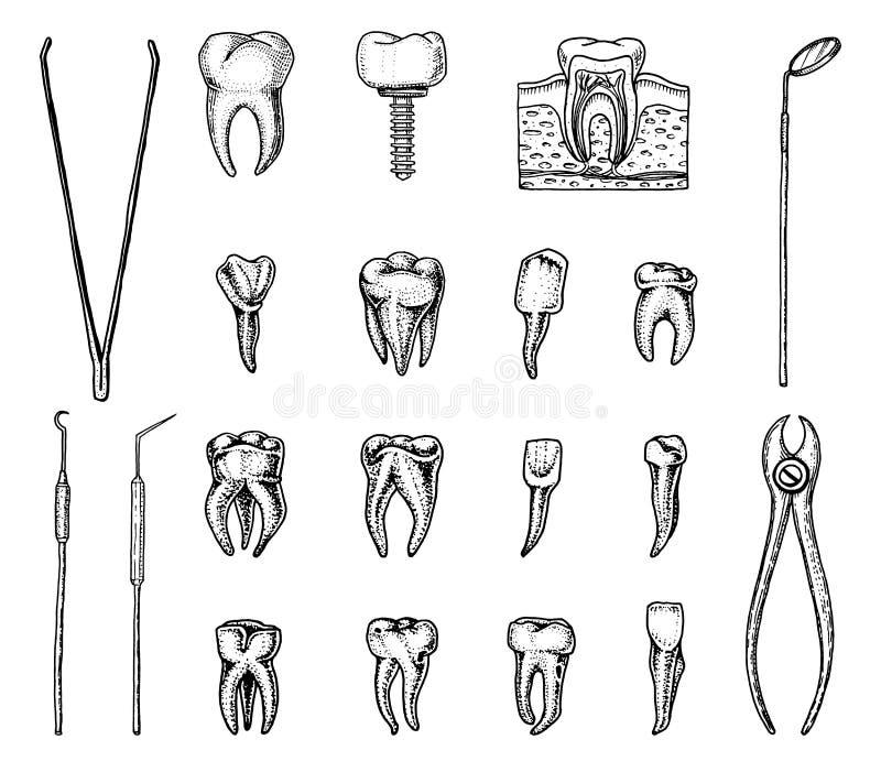 Молярная эмаль зубов, зубоврачебный комплект оборудование аппаратур доктора дантиста ротовая полость чистая или больная здоровье  бесплатная иллюстрация