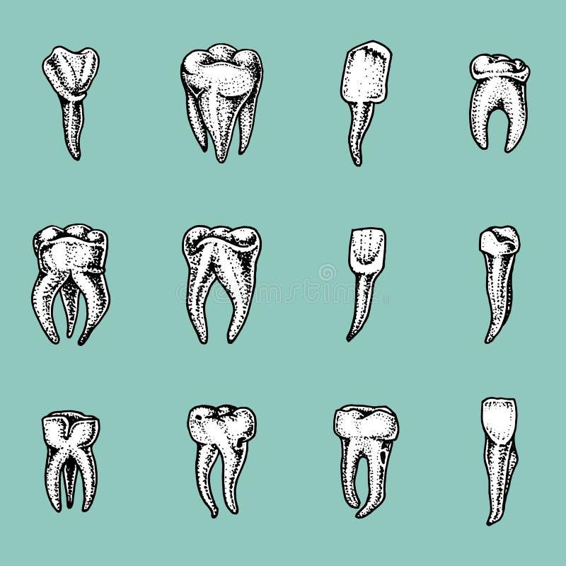Молярная эмаль зубов, зубоврачебный комплект работа дантиста и заботы для детей ротовая полость чистая или пакостная здоровье или иллюстрация вектора