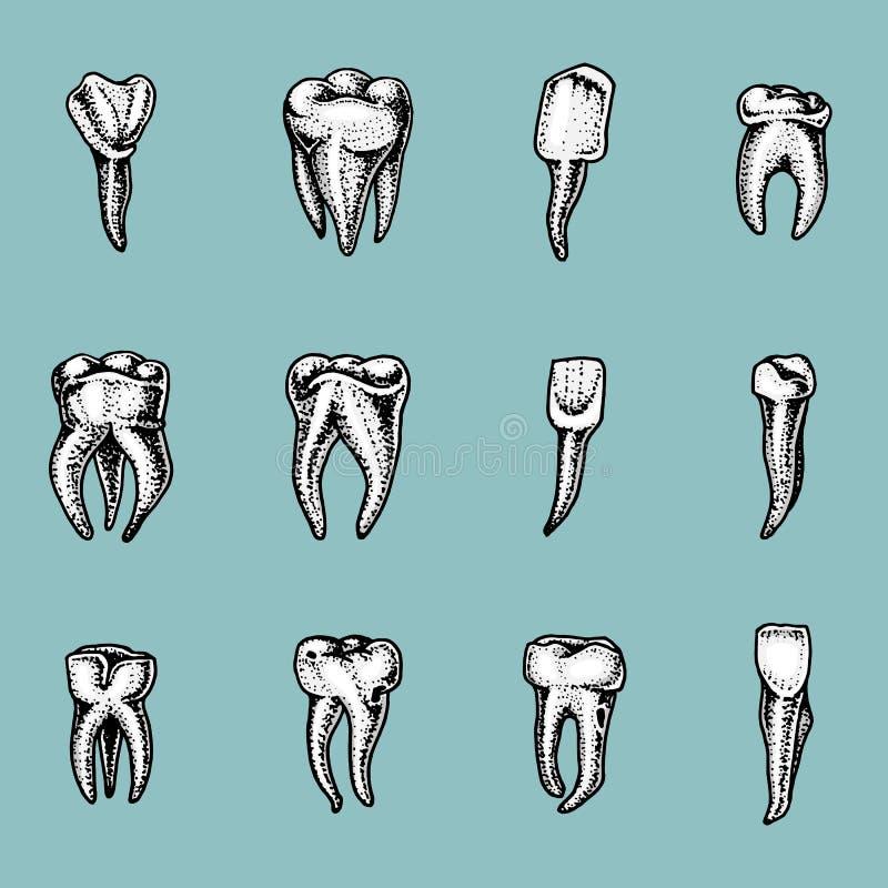 Молярная эмаль зубов, зубоврачебный комплект работа дантиста и заботы для детей ротовая полость чистая или пакостная здоровье или бесплатная иллюстрация