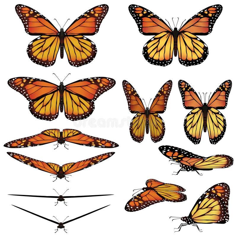 монарх бабочек иллюстрация штока