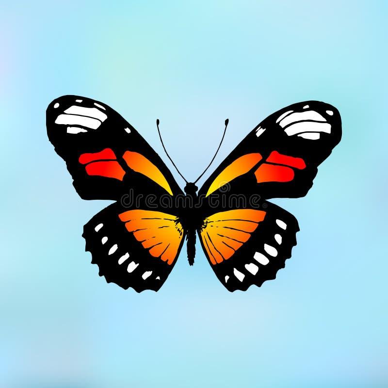 Монарх бабочки Plexippus Даная бабочки иллюстрация вектора