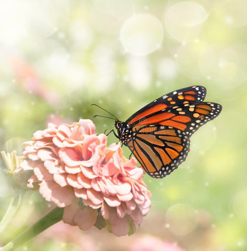 монарх изображения бабочки мечтательный стоковое изображение