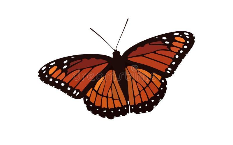 Монарх покрашенный, который апельсином подогнали - вектор бабочки иллюстрация вектора