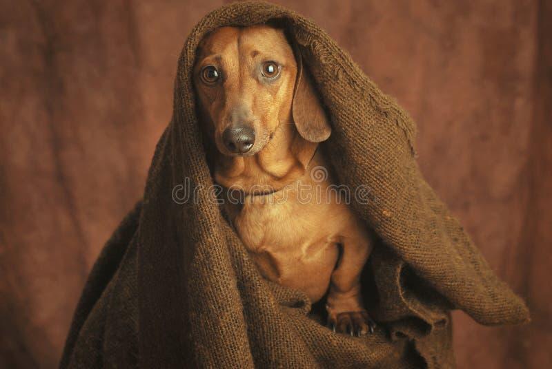 монах Стоковое фото RF