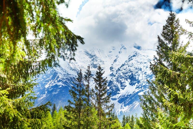 Монблан, взгляд Альпов через ели стоковое изображение
