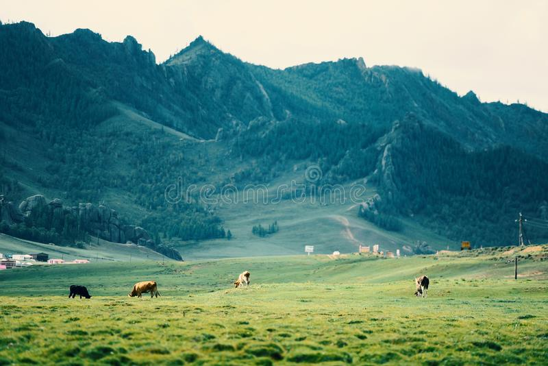 Монголия, ландшафт горы стоковая фотография