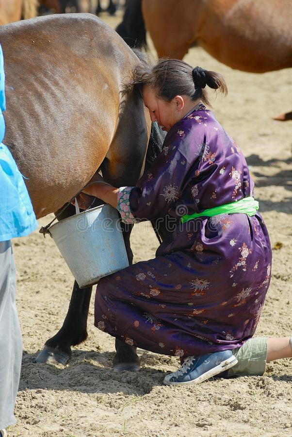 Монгольская женщина нося традиционное платье доит конематку в степи в Kharkhorin, Монголии стоковые фотографии rf