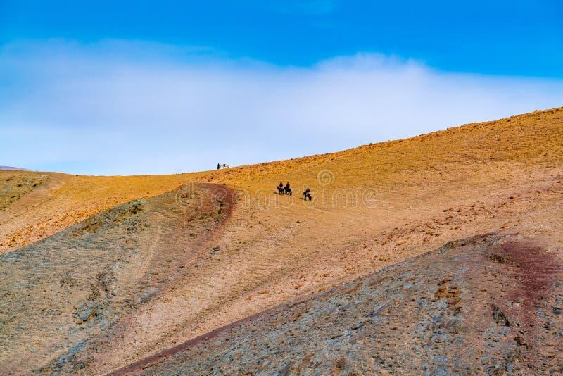 Монгольский золотой охотник Egle в традиционной одежде с их беркутом на их верховой лошади руки к верхней части горы стоковые изображения rf