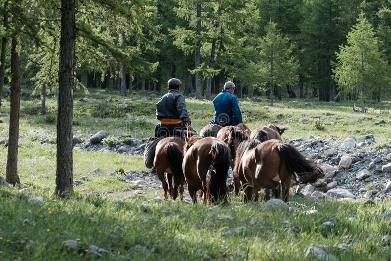 Монгольский наездник возглавляя домой стоковые фотографии rf