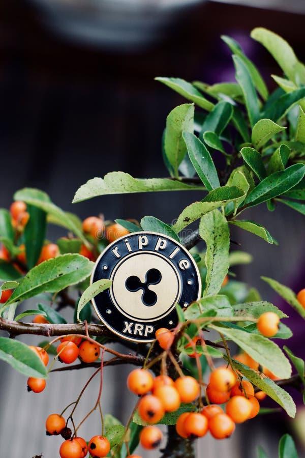 Монетка пульсации на дереве стоковые фото
