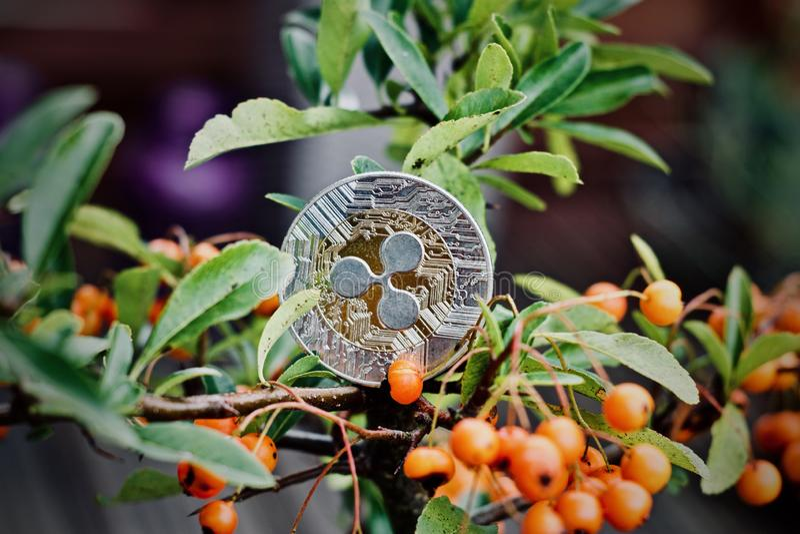 Монетка пульсации на дереве стоковые изображения