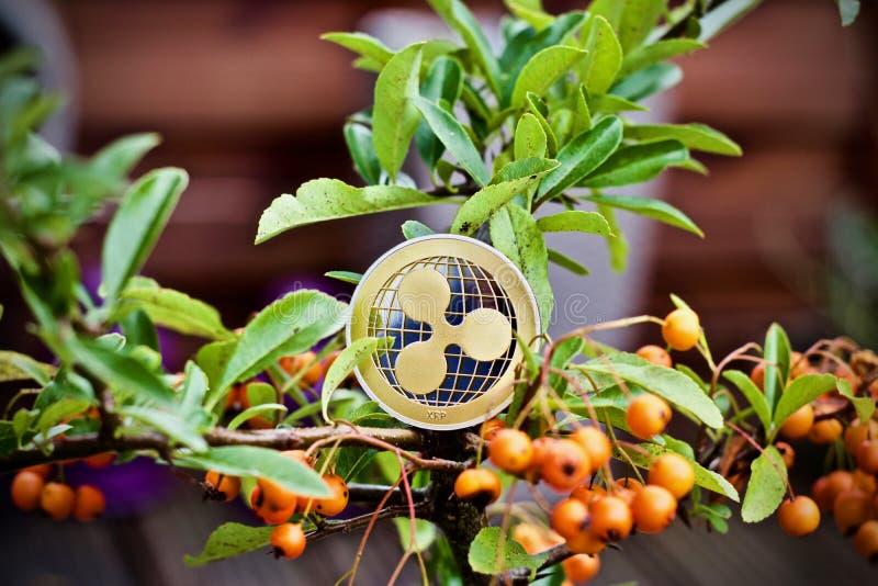 Монетка пульсации на дереве стоковая фотография rf