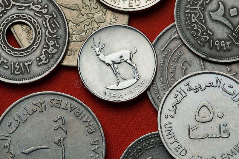 Монетки Объединенных эмиратов Газель песка стоковое изображение rf