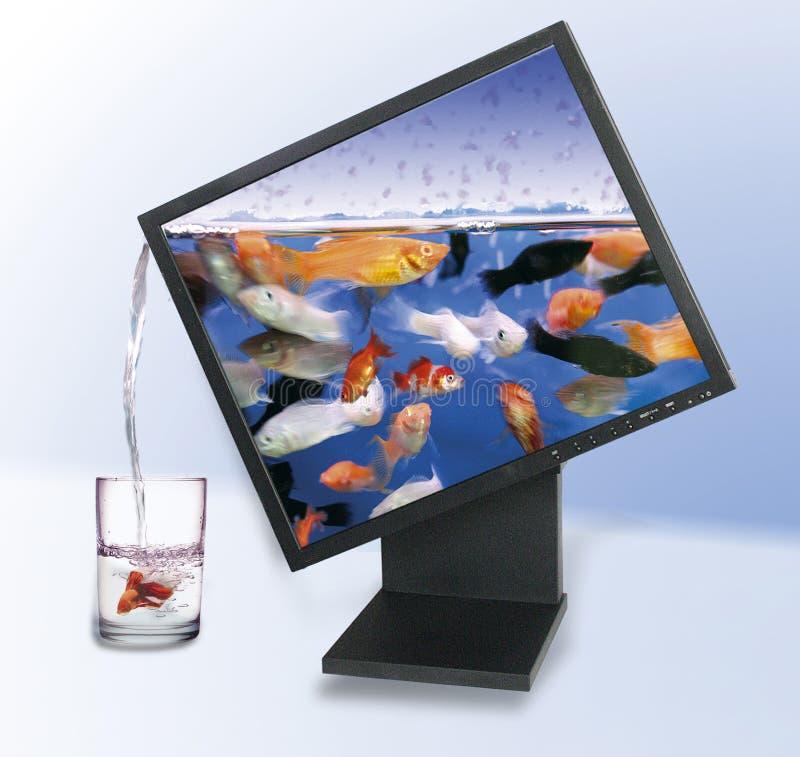 монитор lcd стоковое изображение rf