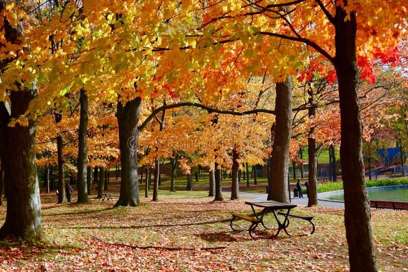 Монреаль, осень, Квебек Канада стоковые изображения rf