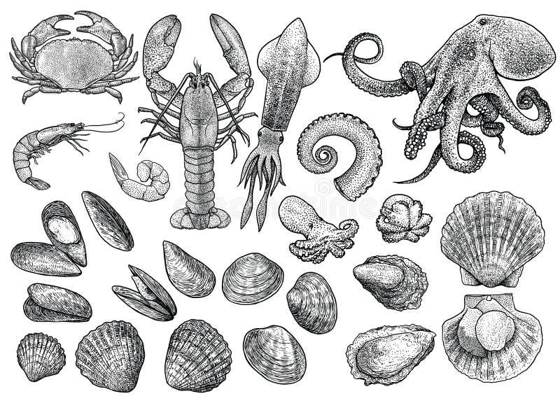 Морепродукты, креветка, креветка, краб, омар, кальмар, осьминог, мидии, scallop, clam, устрица, иллюстрация собрания раковины кук бесплатная иллюстрация