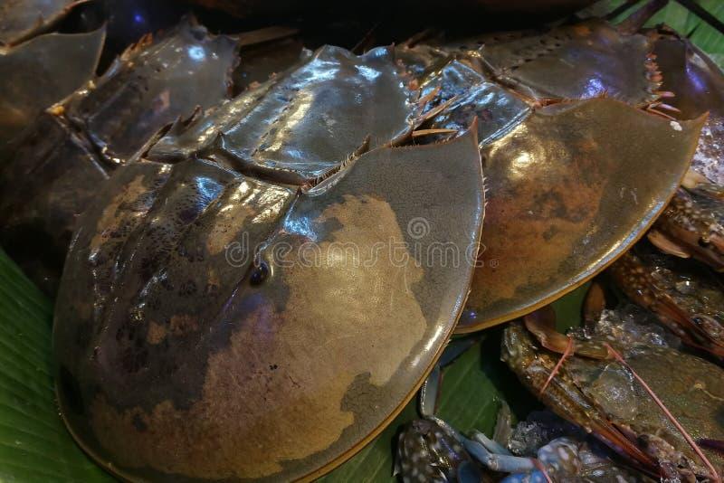 Морепродукты закуски: Свежий Horseshoe краб в рынке стоковое изображение rf