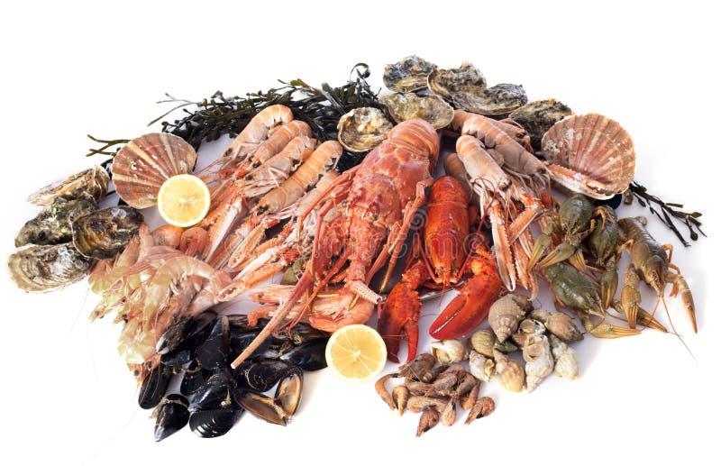 Морепродукты стоковые изображения