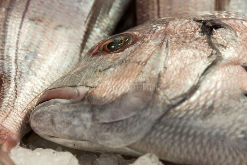 Download Морепродукты ans рыб стоковое фото. изображение насчитывающей среднеземноморск - 40583224