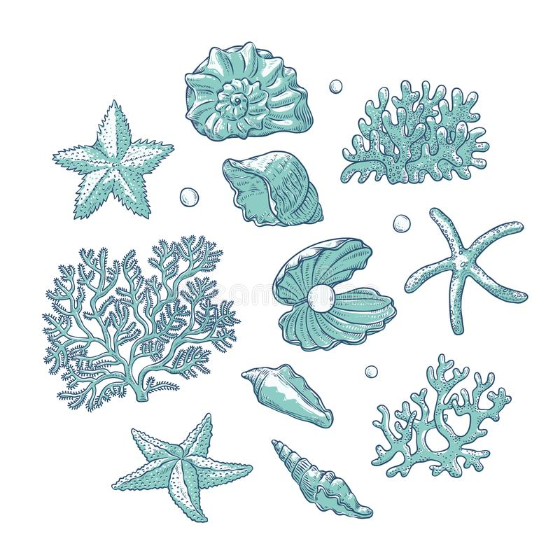 Море вектора установленное обстреливает кораллы звезд и формы жемчугов различные Эскиз плана полипов морских звёзд раковин monoch бесплатная иллюстрация
