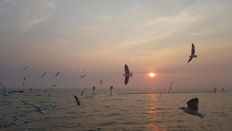 Море и солнце птицы стоковое фото rf
