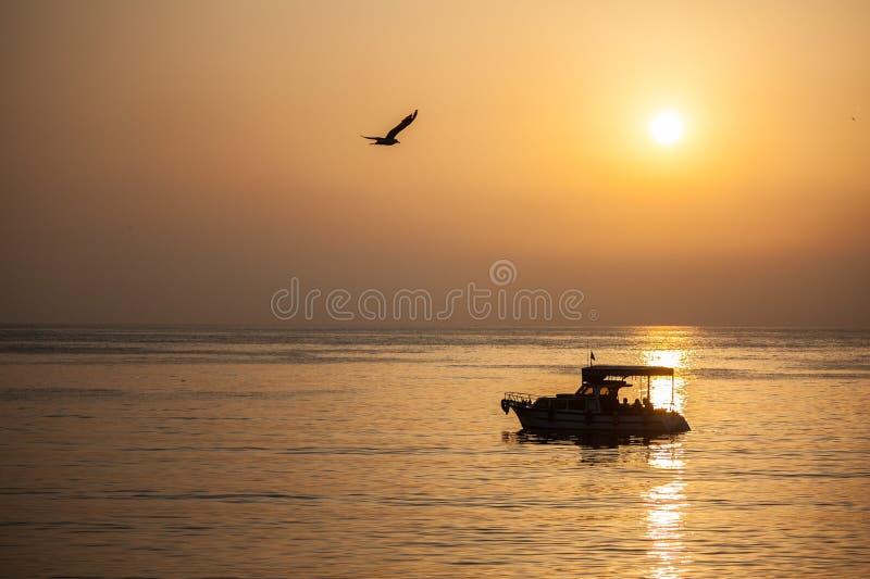 Море, корабль и птица стоковые фотографии rf