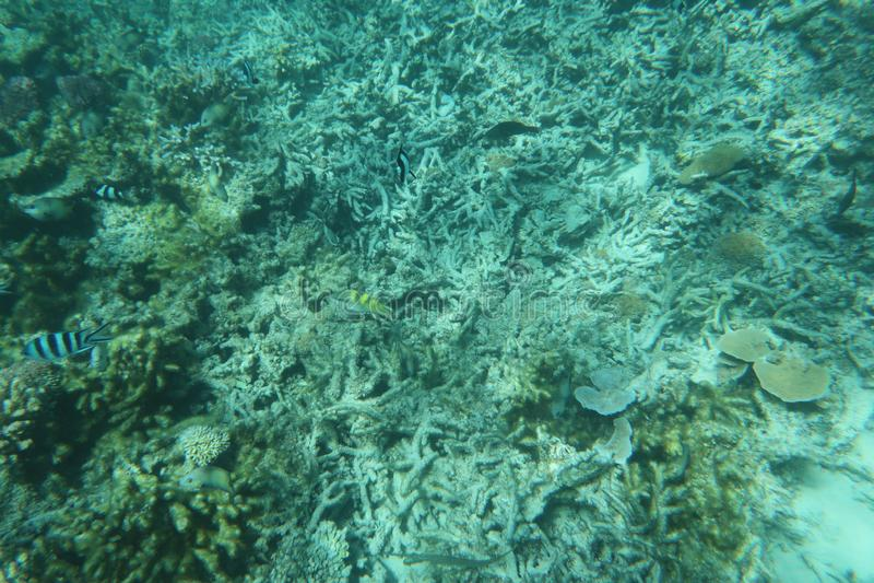 Море красивого сада коралла голубое подводное стоковое изображение rf